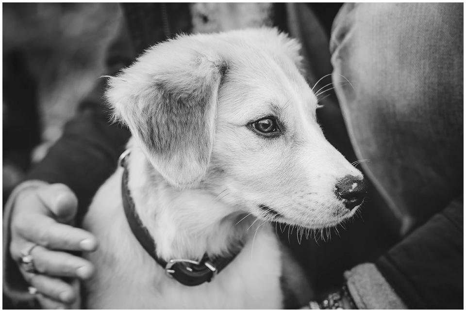 Hund, Welpe, Schwarz-Weiß, Herbst, Astrid Ebert Fotografie